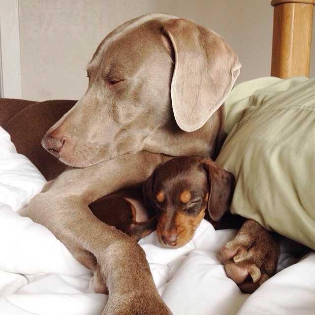 Harlow-and-Indi-Bed-640x640
