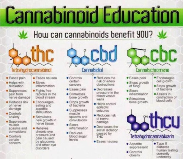 CannabinoidEducation