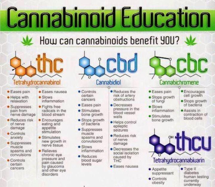 CannabinoidEducation