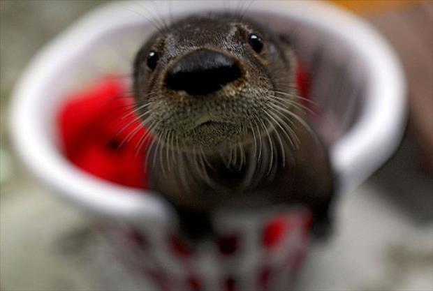 cutest-animals-ever-151