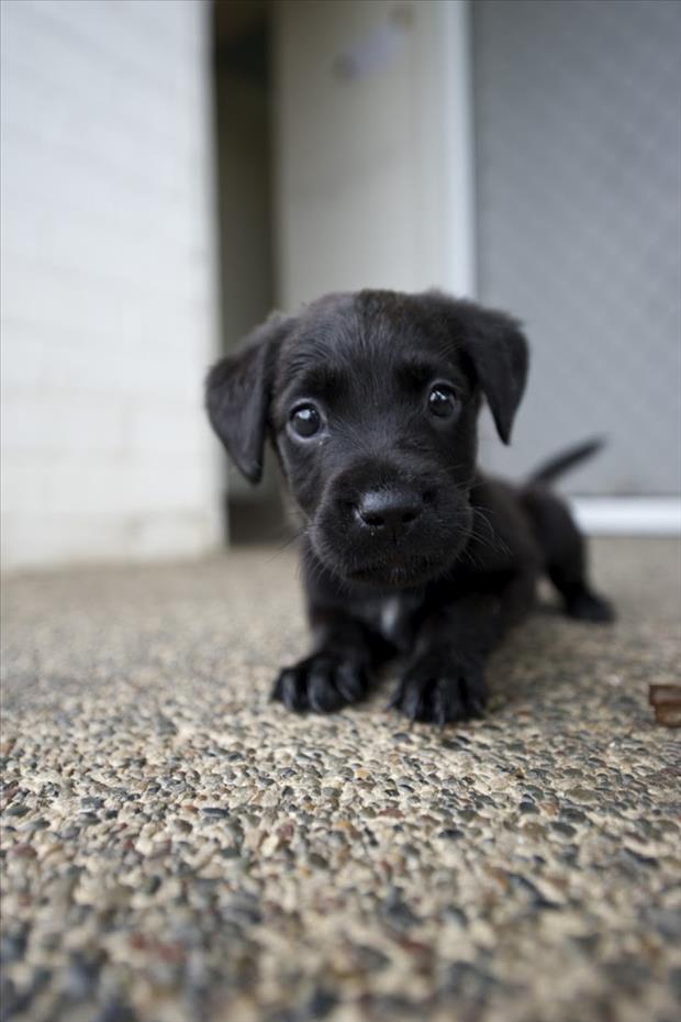 cutest-animals-ever-271