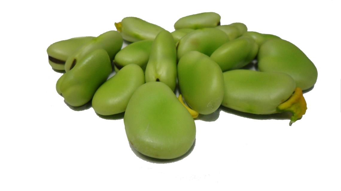 shelled-fava-beans