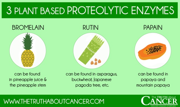 3-plant-based-proteolytic-enzymes
