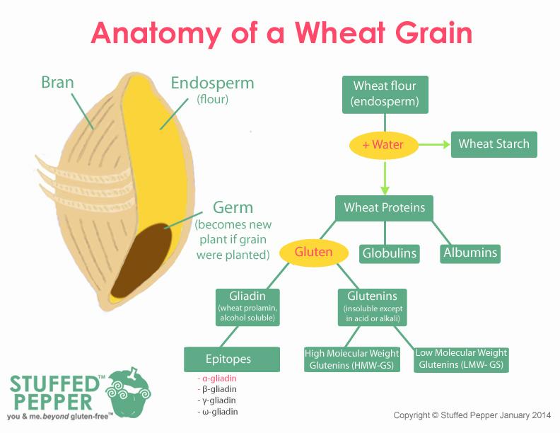 anatomy-of-wheat-grain-visual-50-with-maps