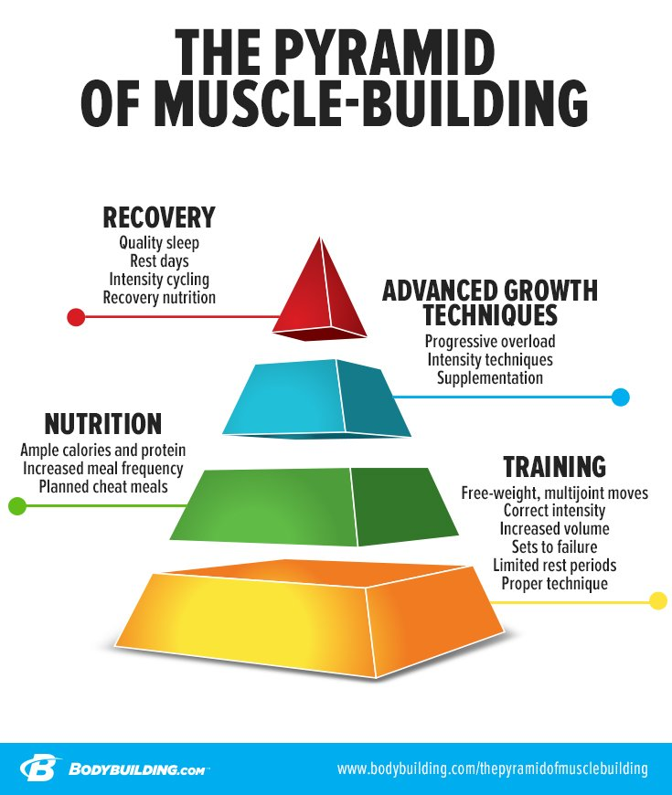 the-pyramid-of-muscle-building-tall-v2